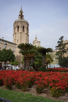 flowers near cathedral
